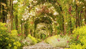 St Luke's Hospice Plymouth Open Gardens