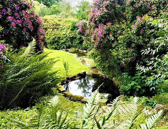 Open Gardens St Luke S Hospice Plymouth
